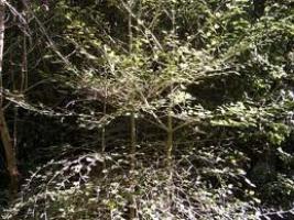 putaputaweta-2-atx-tree-species.jpg