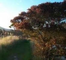 ramarama-scenic-atx-tree-species.jpg