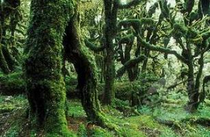 silver-beech-forest-arbortechnix-tree-botanics.jpg