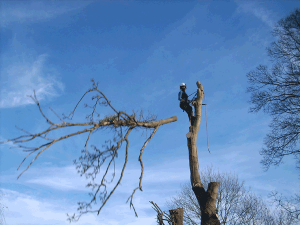 aerial-directional-fell-arbortechnix