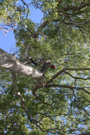arbortechnix-tree-work-auckland