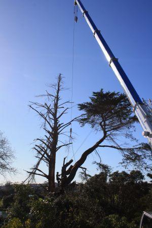 auckland-tree-work-crane-removal
