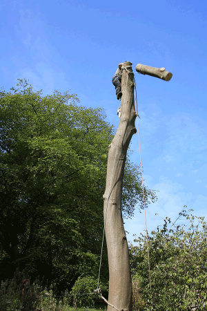 drop-section-felling-pole-dismantle-tree-work-auckland