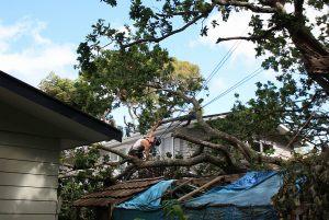 emergency-response-arbortechnix-tree-work-auckland