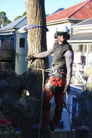 oak-dismantle-climber-shot-tree-services-auckland
