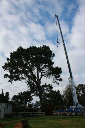 pine-canopy-access-arbortechnix-tree-services-auckland-resize