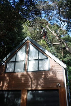 pohutukawa-roof-dismantle-tree-services-auckland