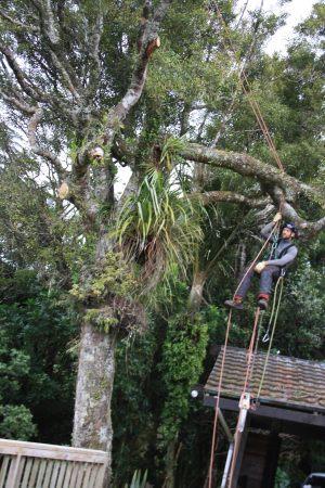 redirection-ascent-arbortechnix-auckland-tree-services