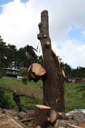 sectional-lowering-atx-tree-services-auckland