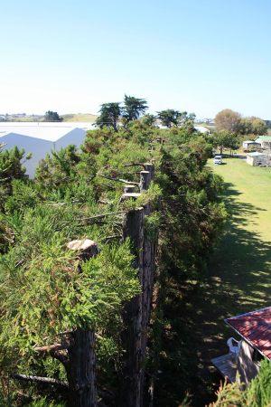 shelter-belt-top-levels-tree-work-auckland