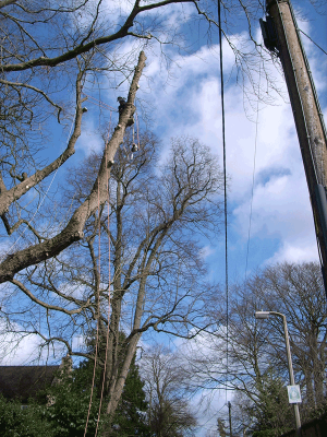 sky-line-pole-dismantle-tree-work-auckland