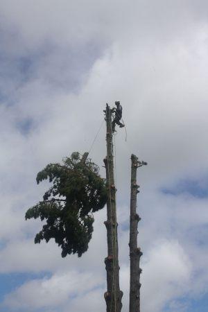 top-drop-arbortechnix-auckland-tree-services