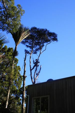 twin-dismantle-auckland-tree-services
