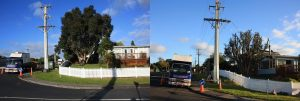 pohutukawa-reduction-before-after-combined