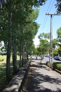 ponsonby-power-line-clearance-after-resize