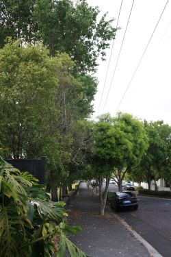 ponsonby-power-line-clearance-before-resize