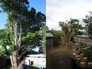 puriri-before-after-combined-resize
