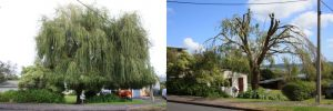 willow-reduction-before-after-combined-resize