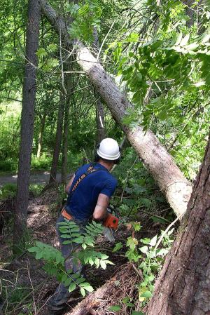 arbortechnix-emergency-tree-removal-land-slip-emergency-services