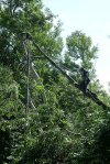 failed-willow-pole-dismantle-auckland-tree-removal-arbortechnix