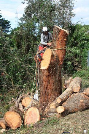 main-bole-descent-tree-services-auckland