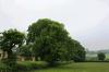 oak-reductions-before-atx