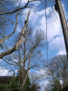sky-line-pole-dismantle-tree-work-auckland