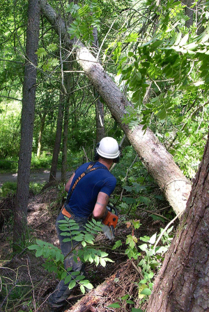 emergency-tree-removal-land-slip-emergency-services
