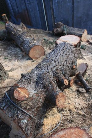 grounded-main-trunk-sections-timber-conversion-atx-tree-work