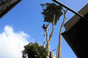 lowering-removal-confined-space-tree-felling-auckland
