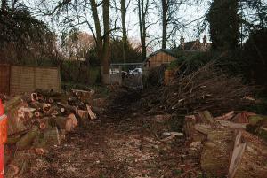 storm-damage-ground-conversion-woodland-management-emergency-response-auckland