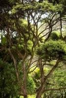manuka-tree-specimen-image-atx.jpg
