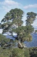 miro-specimen-tree-atx-tree-species.jpg