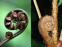 ponga-frond-arbortechnix-tree-species-combined.jpg