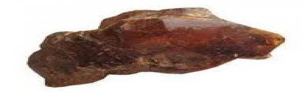 kauri-gum-botanics-arbortechnix.jpg