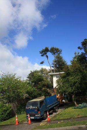aerial-dismantle-tree-removal-arbortechnix
