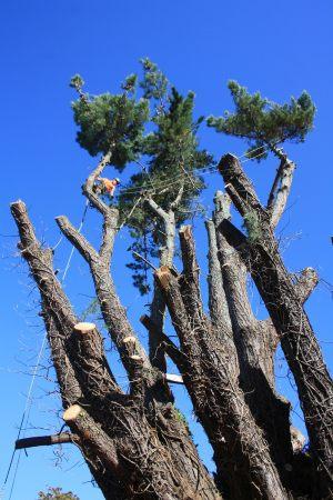 arbortechnix-tree-removal-auckland