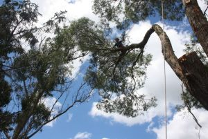 lateral-lowering-ops-atx-tree-work-auckland