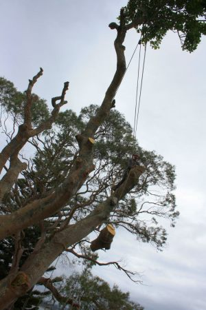 lowering-redirect-atx-tree-work-auckland