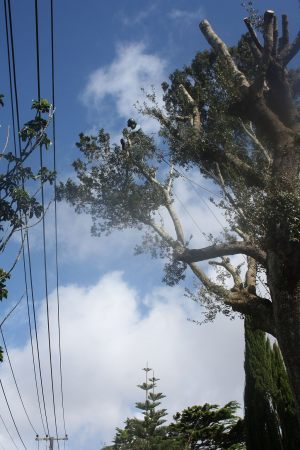 power-line-encroachment-arbortechnix-auckland-tree-work