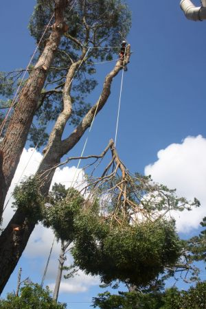 redirection-lowering-ops-atx-tree-services