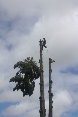 top-drop-arbortechnix-auckland-tree-services
