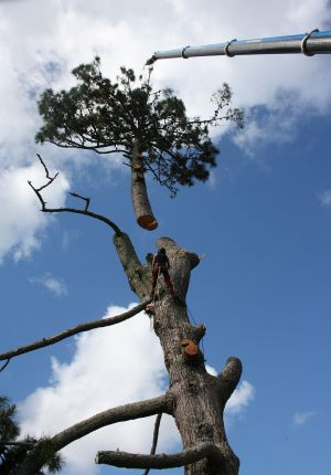 top-section-crane-lift-auckland-tree-work-resize