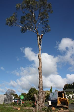 top-section-tree-removal-auckland