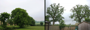 oak-reductions-before-and-after