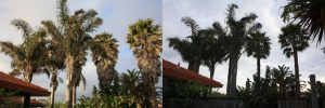 palm-solutions-before-after-combined