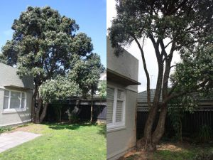 pohutukawa-structural-encroachment-before-after