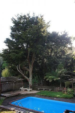 totara-thinning-operations-before