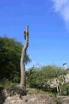 beech-pole-removal-section-fell-removal-services-arbortechnix