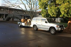 grinder-auckland-tree-work-grinding